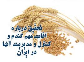 تحقیق درباره افات مهم گندم و کنترل و مدیریت آنها در ایران